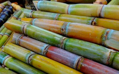 Resolución N° 628/020 – Ministerio de Ganadería Agricultura y Pesca – Requisitos Fitosanitarios Estacas de Caña de Azúcar EEUU
