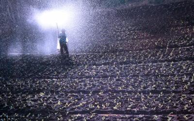 Resolución DGSA/021 – Ministerio de Ganadería, Agricultura y Pesca – Registro e Importación de Fertilizantes