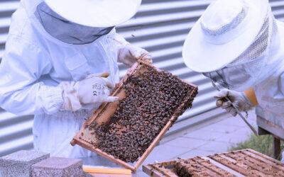 Resolución 108/021 – Ministerio de Ganadería Agricultura y Pesca – Propóleo