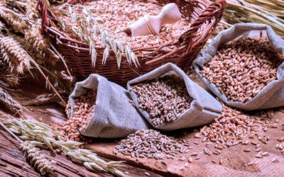Resolución DGSA 461/021 – Ministerio de Ganadería, Agricultura y Pesca